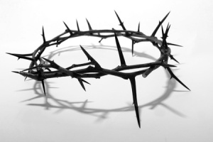 Crown of Thorns Pic